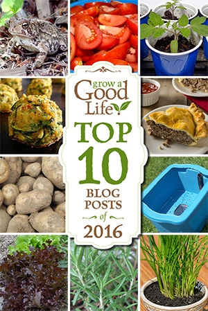 Here is some of the best content from Grow a Good Life over this past year. These are the top 10 gardening and simple living posts that you have viewed, pinned, and shared during 2016.