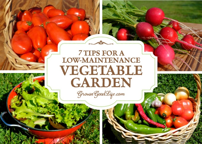 7 tips for a low maintenance vegetable garden for Low maintenance vegetable garden ideas