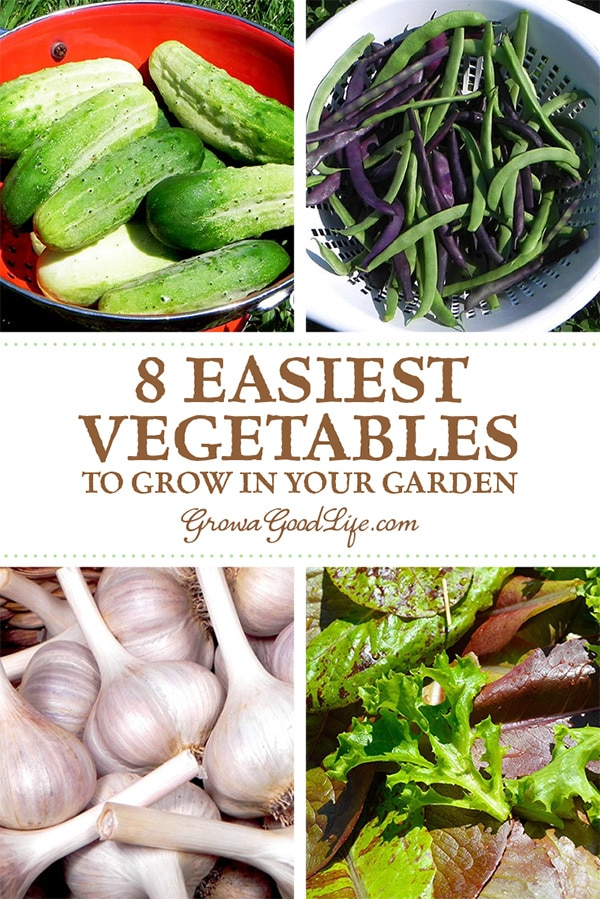 New at gardening? Pressed for time? Want to grow a vegetable garden with the least amount of effort? These are some of the easiest vegetables to grow.