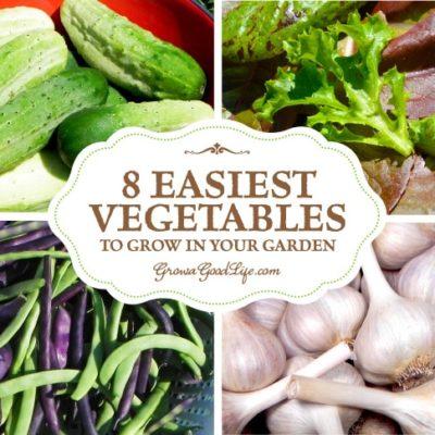 8 Easiest Vegetables to Grow in Your Garden