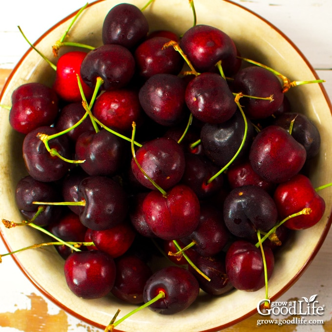 overhead photo of a bowl of cherries