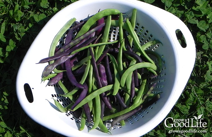 Whether you are new at gardening or are pressed for time and just want to grow a vegetable garden with the least amount of effort, these are some of the easiest vegetables to grow.