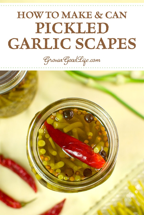 How to Make Garlic Scape Pickles: Garlic scapes are delicious, seasonal delicacies. Learn how to preserve garlic scapes by pickling for a delicious, garlicky flavored snack, side dish, or sandwich topping. Visit for full recipe.