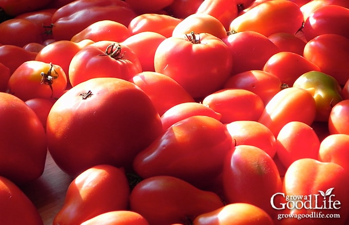 Canning your own diced tomatoes is an easy way to preserve an abundance of ripe tomatoes quickly. Canned tomatoes are handy to use in chilies, soups, stews, and casseroles.