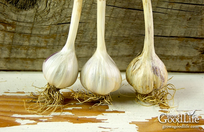 three small garlic cloves