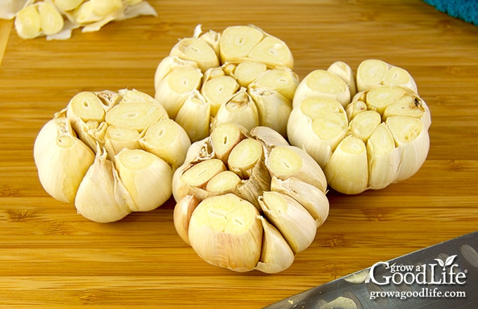 garlic bulbs on a cutting board with tops trimmed
