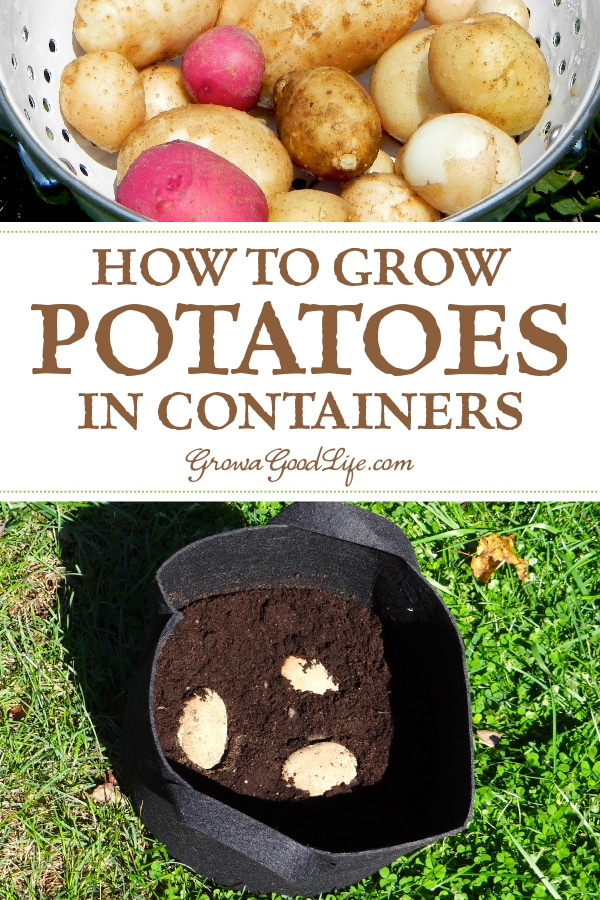 You don't have to devote precious garden space to grow potatoes. Consider trying to grow potatoes in pots, grow bags, buckets, or other containers.