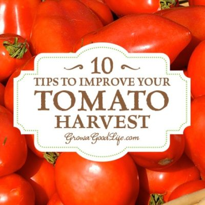 Whether you are growing tomatoes for salads, or to preserve into canned tomato sauce and salsa, these tips will help you improve your tomato harvest.