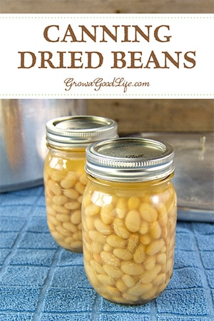 Pressure canning dried beans is a frugal way to add to your food storage. Reduce the sodium and chemicals found in commercially canned beans by canning your own.