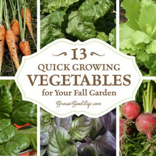 13 Quick Growing Vegetables for Your Fall Garden