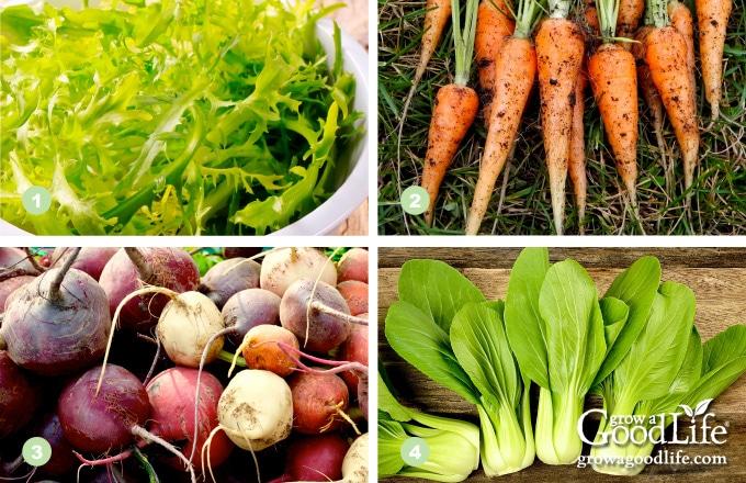 1) Arugula, 2) Baby Carrots, 3) Beets, 4) Bok Choy