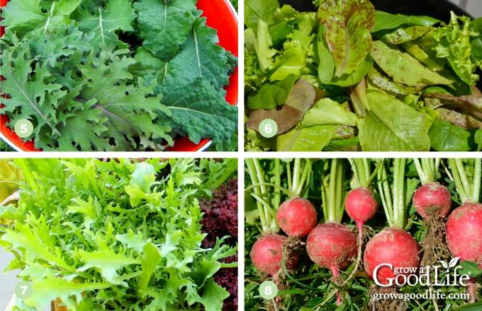 5) Kale, 6) Lettuce, 7) Mustard Greens, 8) Radishes
