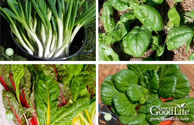 9) Scallions, 10) Spinach, 11) Swiss Chard, 12) Tatsoi