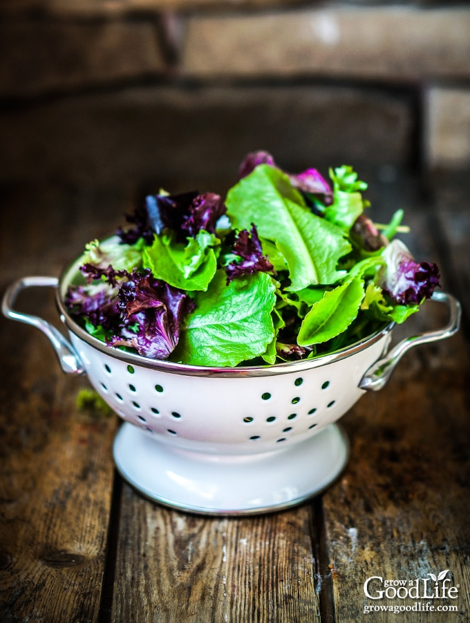 white colander filled with colorful salad greens on a table