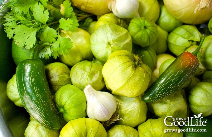 ingredients for making and canning tomatillo salsa verde