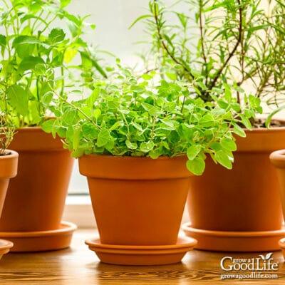 Grow Herbs Indoors: Herbs that Thrive Inside