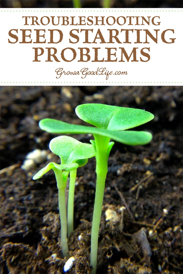 Growing your own vegetable garden transplants from seed is pretty straightforward, but sometimes you can run into problems. Here's how to identify and resolve some of the most common issues you may run into when starting seeds indoors.