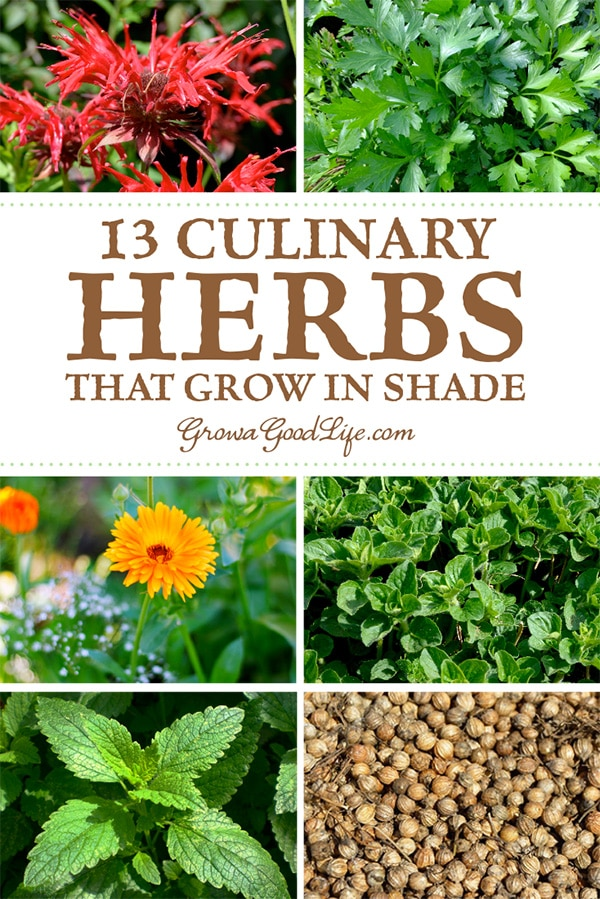 If you are growing an edible landscape, you may wonder how to take advantage of the shady spots near buildings or around trees. Shady areas in your yard may be the perfect spot to plant herbs. Here are 12 culinary herbs that grow in partial shade.