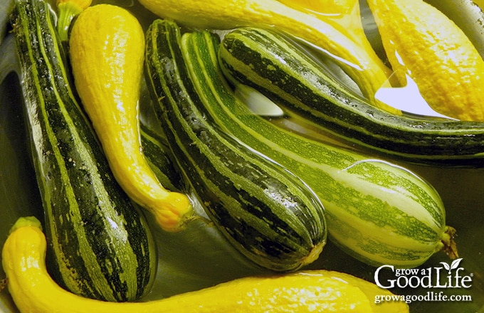 washing zucchini and summer squash in water