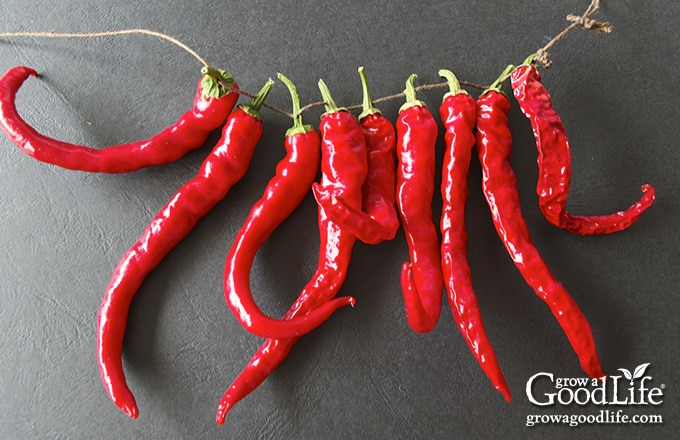 red cayenne peppers threaded with a string for hanging