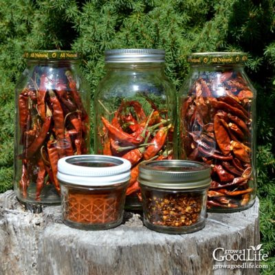 Got peppers? Drying is an excellent way to preserve peppers. Dehydrating removes the moisture and concentrates the flavor and heat of the peppers.