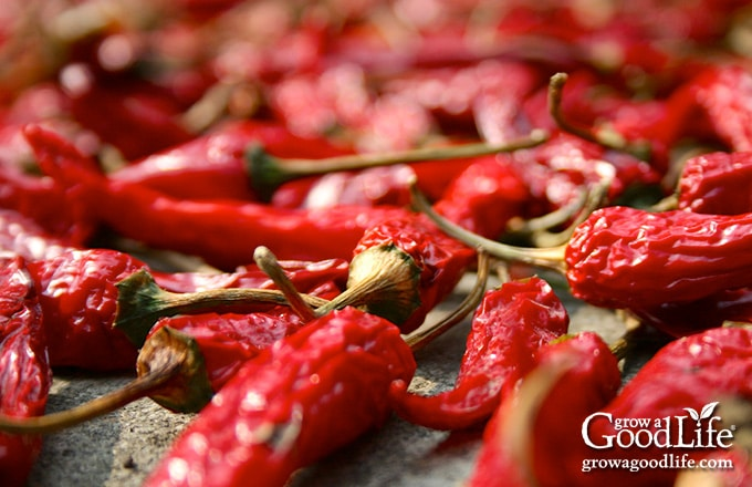 closeup of dried red chile peppers on a baling sheet