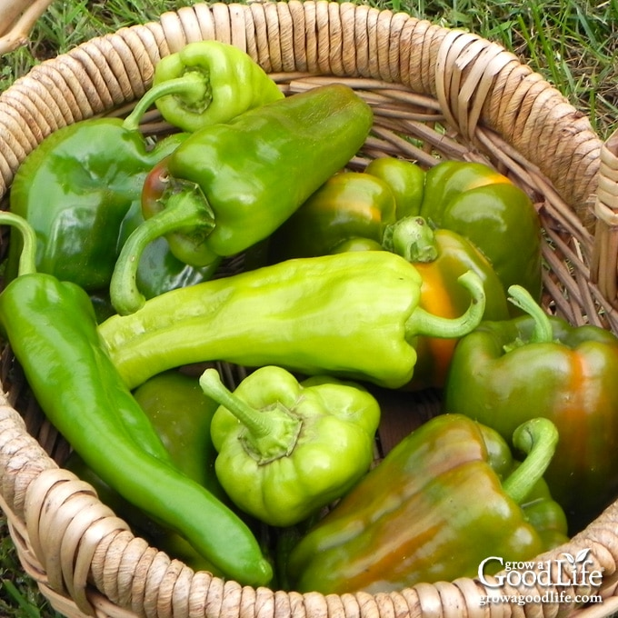 Got an abundance of peppers from your garden? Whether you have hot chiles or sweet bells, here is how to freeze peppers to enjoy all winter long.