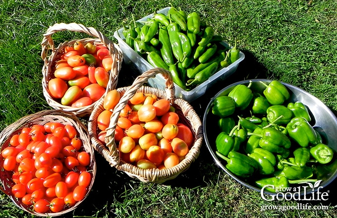 bowls and baskets of tomatoes and peppers