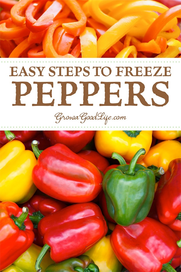 Peppers are one of the few vegetables that can be frozen without having to blanch them first. Frozen peppers can be used to make salsa, fajitas, stir-fry, or any cooked recipe where you would normally use peppers. Read on to see how to prepare and freeze peppers.