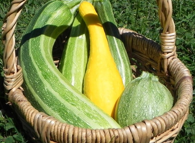 Ah zucchini... It's the crop that just keeps on giving. Here are five ways to freeze zucchini so you can enjoy the harvest bounty well into winter.