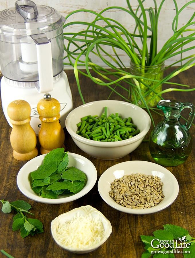 Ingredients for Garlic Scape Lemon Balm Pesto