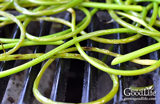 closeup of garlic scapes on the grill