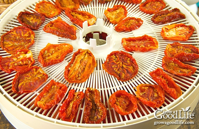 dehydrated tomatoes on a dehydrator drying screen