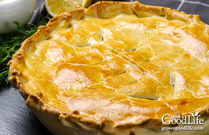 closeup of baked salmon pie with golden crust