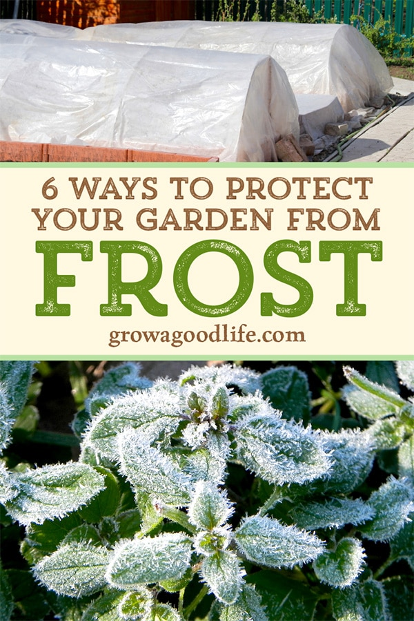 6 Ways to Protect Plants from Frost