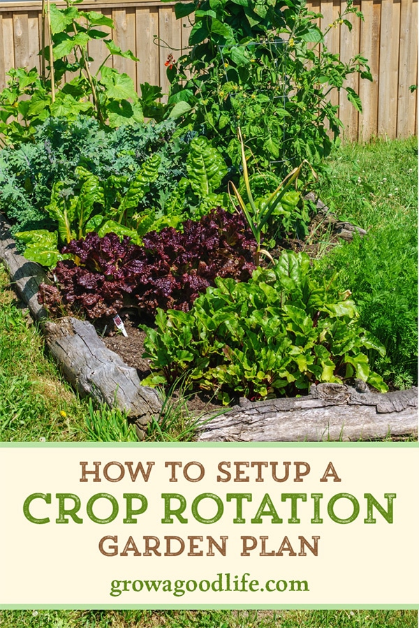 It is beneficial to rotate plant families from one garden bed to another each growing season. Vegetables that are in the same family use similar nutrients and are vulnerable to the same pests and diseases. Discover the benefits of crop rotation and how to apply it to your backyard vegetable garden.