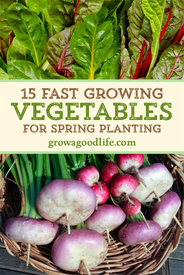 Get a jump-start on enjoying fresh harvests by planting these fast growing vegetables this spring. Discover 15 fast growing, cool-season vegetables to plant in in the vegetable garden this spring.