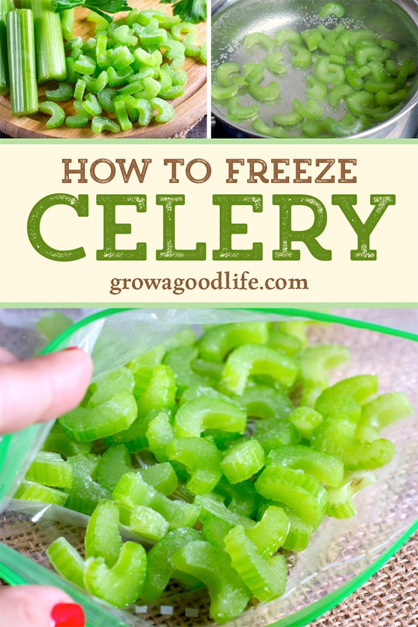 Freezing celery is a simple way to reduce food waste in the kitchen. With a little effort, you can have frozen celery ready to add to your favorite recipes. Follow these easy steps to freeze celery.