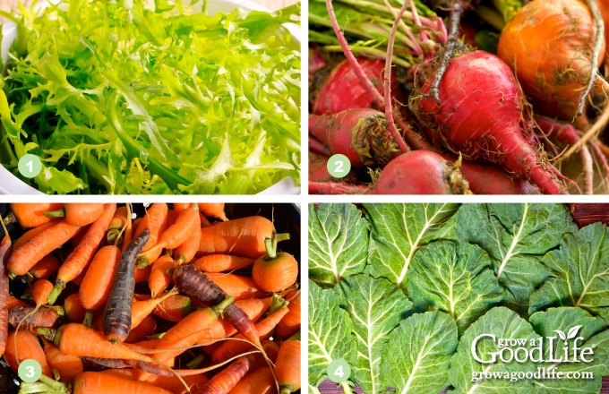 photos of arugula, beets, baby carrots, and collards