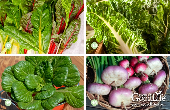 photos of two types of swiss chard, tatsoi, and turnip