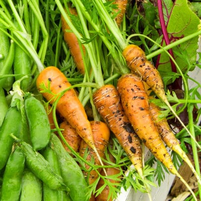 Get a jump-start on enjoying fresh harvests by planting these fast growing vegetables this spring.
