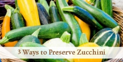 zucchini harvest in basket