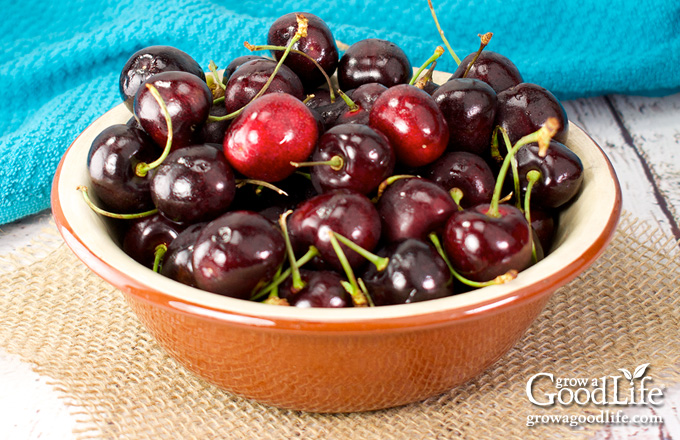 brown bowl of sweet cherries on a table