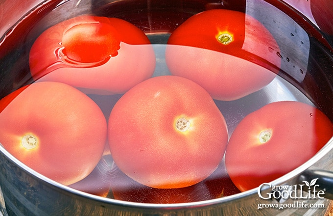 blanching tomatoes in pot of boiling water