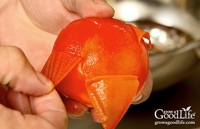 closeup photo of peeling tomatoes