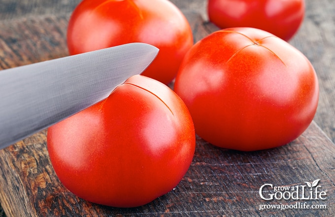"closeup of a knife cutting an ""X"" into the bottoms of tomatoes"