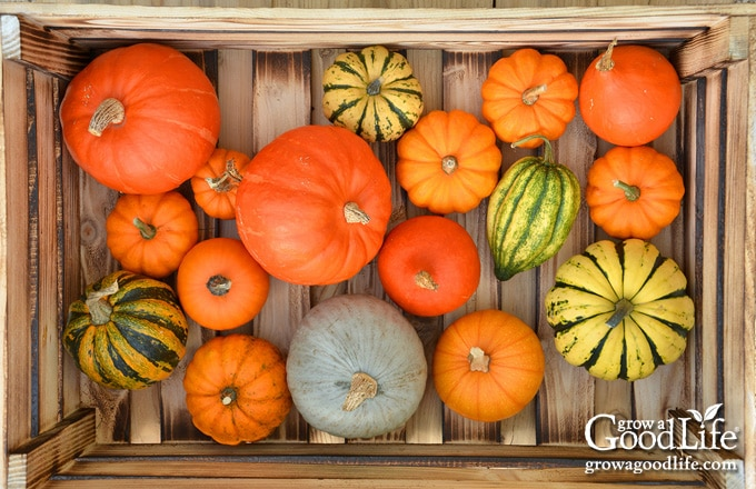 overhead photo of squash and pumpkin on a wooden crate