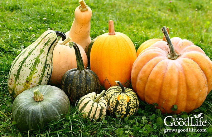 a variety of squash and pumpkins on grass