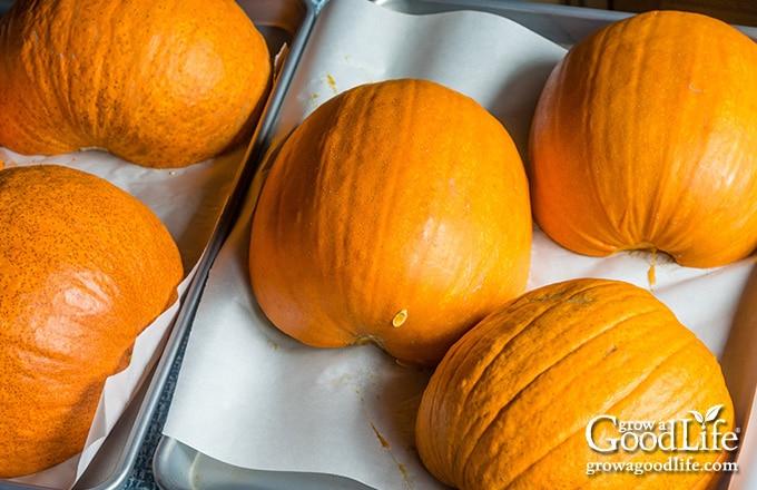 pumpkins on a baking sheet