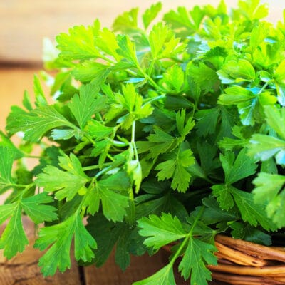 bunch of freshly harvested parsley in a basket on a table